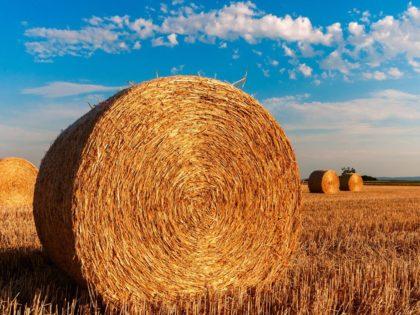 Nilfisk cuenta con sistemas estacionarios para sus instalaciones agrícolas o de almacenaje, debido a la creciente consolidación en el sector agrícola.